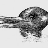 Test You See A Duck Or A Rabbit
