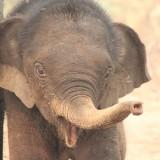dnews-files-2015-10-elephant-cancer-free-jpg