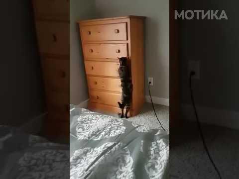 Мачето Локи е шампион во играње криенка