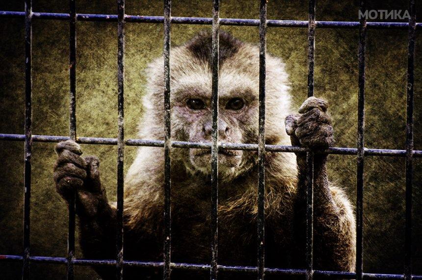 8 животни на кои за  исчезнувањето  може да им позавиди и Худини