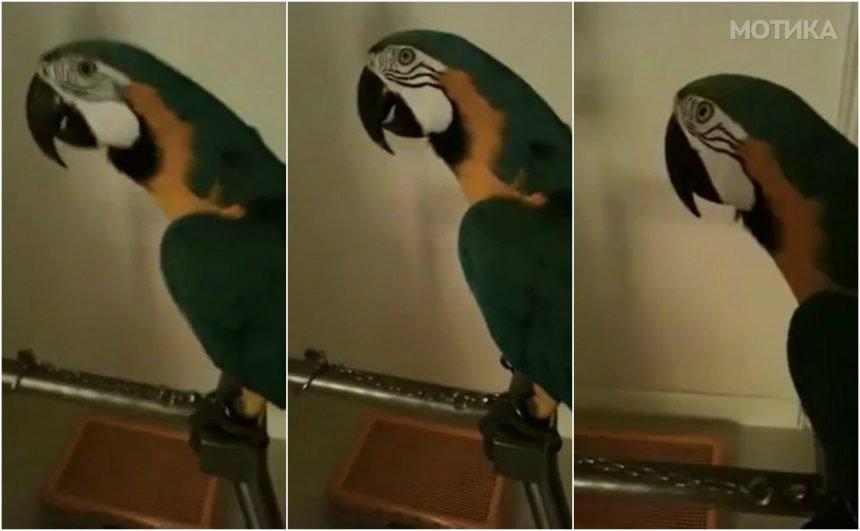 Нервозен папагал мрази кога газдарицата го снима