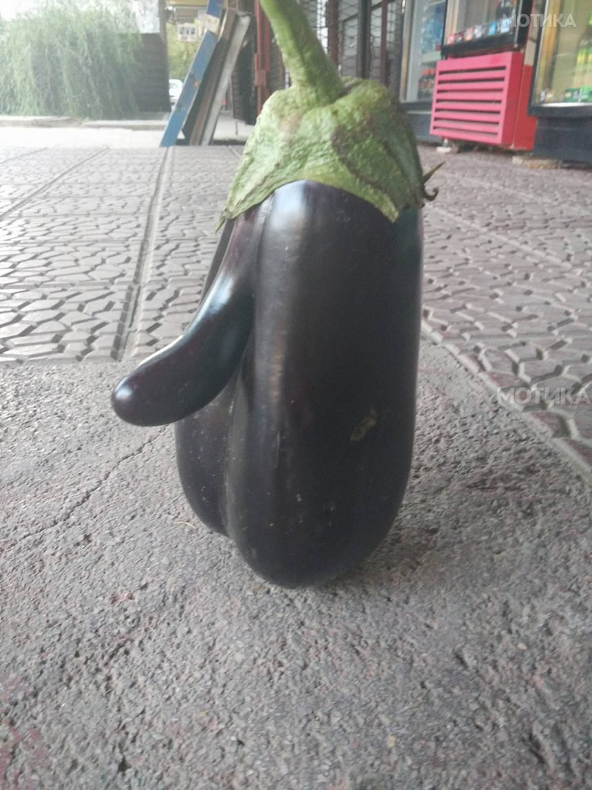 Битолски црн патлиџан