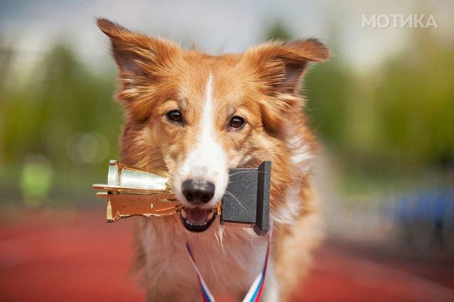 15 домашни миленици кои влегле во Гинисовата книга на рекорди