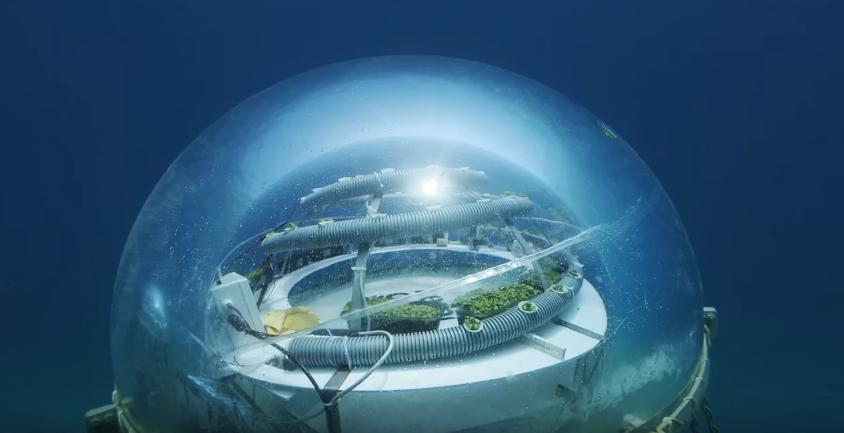 tatko-i-sin-odgleduvaat-ovoshje-i-zelenchuk-8-metri-pod-povrshinata-na-sredozemnoto-more